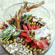 This succulent terrarium was created on a short notice for our client so it can be gifted. In hurry we were unble to take nice pictures. But we so love the red painted echivera ❤. Dont you? Call or watsapp now on +971502937772. Follow us on instagram and facebook 'mygreendubai' for more. #dubai #mydubai #plants #livinggifts #terrariumsdubai #succulent #buydubai #ilovedubai #dubaiuae #dubaiplants #ilovedubai #iloveuae #homegarden #sukulent #succulents #eventsindubai #eventsinuae #eventplanner…