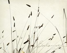 Grass Balance Art by Amy Melious at AllPosters.com