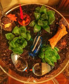 succulent glass vase