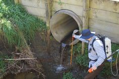 Perched culverts – installed above the predominant waterline – are one of the most common barriers to native fish migration. Here, Hawke's Bay Regional Council scientist Dr Andy Hicks investigates a perched culvert. Freshwater Fish, Waterfalls, Pools, Teaching, Manga, Manga Anime, Manga Comics, Education, Swimming Pools