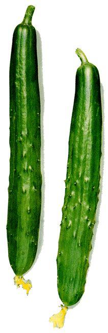 野菜図鑑「きゅうり」