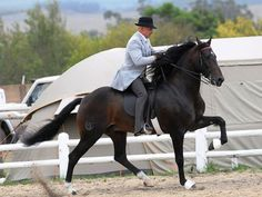 Boerperd Showing - Traditional 5 Gaited Classes