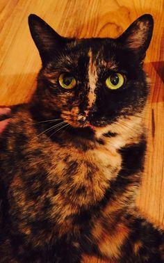 Peach-O the cat matches my floors http://ift.tt/2rdMf7n