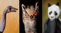 fotos-animales-Guido-Daniele.jpg (640×350)