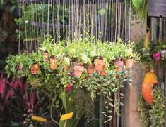 Marta Malheiro, Author at Revista Jardins - Página 3 de 5 Ficus Pumila, Diy Privacy Screen, Pergola, Serpentina, Dog Recipes, Garden Photos, Dog Snacks, Healthy Living Tips, Clay Pots