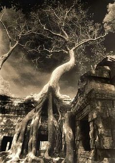 John McDermott is raising funds for Elegy: Reflections on Angkor on Kickstarter! A fine art photography book that captures the solitude of the temples of Angkor before the influx of large-scale tourism. Twisted Tree, Dark And Twisted, Beautiful Landscapes, Beautiful Images, Fine Art Photography, Travel Photography, Tree Tunnel, Angkor Wat, Great Pictures