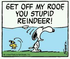 Get off my roof reindeer!