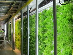 4   Grow Kale Inside Shipping Containers, With This Hipster Aquaponics Design   Co.Exist   ideas + impact