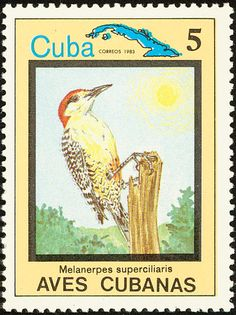 West Indian Woodpecker stamps - mainly images - gallery format