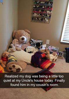 90 Funny Dog Snapchats Pictures