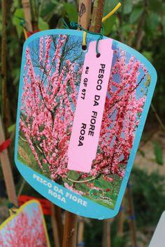 Pesco da Fiore - Peach Flower Trees