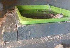 DIY Lizard Pool Deck - petdiys.com