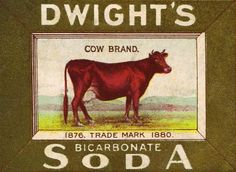 Free Printables - Antique Cow Image Advertisement from KnickofTime.net