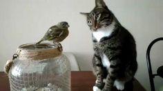 Cat mauls bird in the cutest way possible http://ift.tt/2Gp4VUT