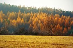 The last days of autumn - The White Carpathians