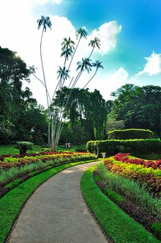 Botanical Gardens, Peradeniya, Sri Lanka (www.secretlanka.com) Ceylon Sri Lanka, Walter Mitty, Native Country, Tropical Gardens, British Colonial, Beautiful Islands, See Picture, Landscape Architecture, Botanical Gardens