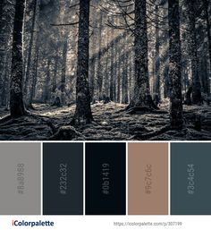 Color Palette Ideas from Woodland Forest Tree Image Hex Color Palette, Bedroom Colour Palette, Colour Schemes, Color Combos, Couleur Html, Forest Color, Tree Images, Color Swatches, Color Theory