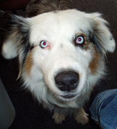 Porqué tu perro no deja de ladrar http://www.cuidandotumascota.com/blog/posts/porque-mi-perro-no-deja-de-ladrar