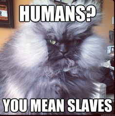 humans? you mean slaves - humans? you mean slaves  Evil Overlord Cat