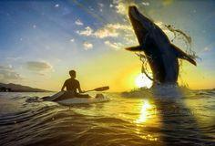 """While A Whole Whale Gone""  Ini adalah perjalanan,kita hanya singgah,dan akan kembali untuk melanjutkanya  Life Is Like A Boat  Full Retouch By : #Me Original Picture By : @adammirzaahmad  #backlight #digiart #whale #beach #boat #sunset #splitcomplementary #colorharmony #ruleofthirds #composition #blue #life #motivation #beauty #stardust #shadows #dreamworld #repost #reedit #photography #muaraputat #traveling #artsviral #earthbestshot #hubs_united #theglobewanderer #master_gallery…"