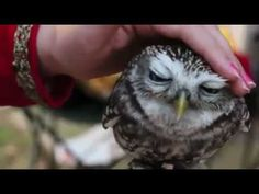 I generally don't like birds but this little owl is so cute!