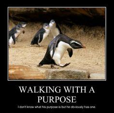 Penguins walking, strut