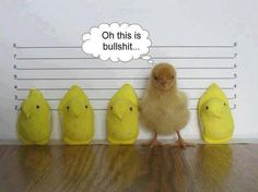 Easter humor Cute Animals Funny Animals Animal Funnies Animal Memes Animal Captions – Fit for Fun % Funny Animal Pictures, Funny Animals, Cute Animals, Animal Pics, Small Animals, Random Pictures, Farm Animals, Funniest Animals, Crazy Animals