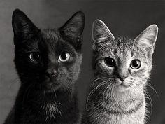 Reposting @cats_picsgram: #cat #catsofinstagram #cats #catstagram #instacat #catlover #catoftheday #ilovemycat #blackcat #catlovers #lovecats #catsagram #instagramcats #instacats #caturday #crazycatlady #mycat #catlove #cutecat #kittycat #catlady #ilovecats #catsofig #catlife #cats_of_instagram #catwalk #cat_features #catofinstagram