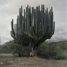 Cactus monument, sleeping worshipper.