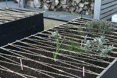 Jak Zrobić Ogród Warzywny House, Gardens, Home, Outdoor Gardens, Homes, Garden, House Gardens, Houses