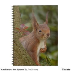 Mischievous Red Squirrel Notebook Mischievous looking red squirrel peeking out from behind a tree.