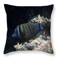 Throw Pillow featuring the photograph Red Sea Sailfin Tang by Johanna Hurmerinta