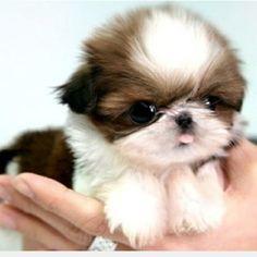 Cuteness attack!! :P