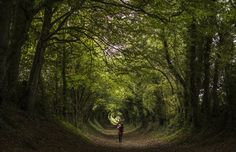 Images of the Season: Fall Is in the Air, Part II (Xanthe Lewis-Hall, and her mother walk through a tunnel of trees down an old Roman Road on October in Halnaker, England) The Atlantic Roman Roads, Lost In The Woods, Seasons Of The Year, Pathways, Stairways, England, Country Roads, Fantasy, Fall