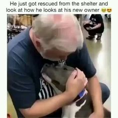 Cute Little Animals, Cute Funny Animals, Funny Cute, Cute Dogs And Puppies, I Love Dogs, Doggies, Funny Animal Memes, Funny Dogs, Gato Gif