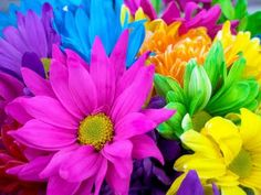 What..else..but flowers!!...Colorful..and beautiful!!<3