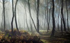 Dreamy Bolehill 3   by J C Mills Photography