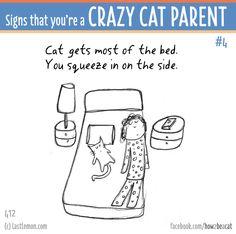 http://lastlemon.com/cats/