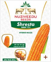 Maize : Shresta- NMH 731 Plant height : Tall(260-270 cms) Duration : Kharif-105-110 days, Rabi-115-120 days Ear placement : Low(115-120 cms) Grain type and colour : Semi dent, orange yellow Ear : Long cob, medium girth and with good tip filling Special features :       * Suitable for high density planting     * Long cobs with 14-16 rows     * Uniform placement of cobs, cob size is uniform     * Tip filling is good     * Good husk coverage     * Shelling % 83-85