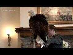 Arend brengt de trouwringen - Eagle brings the wedding rings.