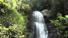 Madagascar, chameleon, anteater, dragonfly, frog, bird, lizzard, lemur, forest, rainforest, nature, beautiful, awesome, camaleón, oso hormiguero, libelula, rana, pájaro, lagarto, lagartija, bosque, selva, naturaleza, bonito, precioso, impresionante, paisaje, landscape