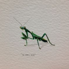 Day 114 : Praying mantis. 27 x 23 mm. #365paintingsforants #prayingmantis (at Vredehoek)