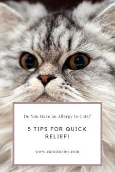 If you have an allergy to cats, but love your pet, there's no need to despair!  |  CatsStories.com