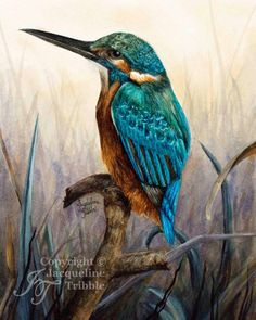 Print - Kingfisher Watercolor Painting by Jacqueline Tribble - Beautiful turquoise bird print, wildlife watercolor, sapphire, giclee print Watercolor Bird, Watercolor Paintings, Realistic Paintings, Bird Drawings, Bird Prints, Bird Art, Beautiful Birds, Blue Bird, Blue Green