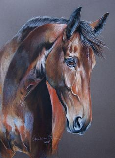 Discover thousands of images about Paulina Stasikowska Pretty Horses, Horse Love, Beautiful Horses, Horse Drawings, Animal Drawings, Horse Pictures, Pictures To Paint, Cavalo Wallpaper, Horse Artwork