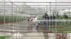 IF_LIFE IN CORO FIELD'S OUTDOOR SPACE