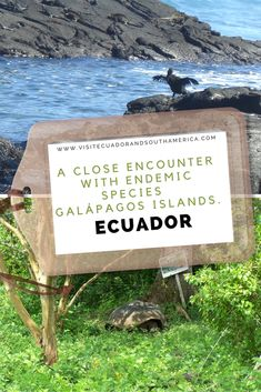 Enjoy your stay at the Galápagos Islands, in Ecuador. You get to experience a close encounter with these five endemic species Ecuador, Santa Cruz Island, South America, Latin America, How To Book A Cruise, Spanish Speaking Countries, List Of Activities, Close Encounters, Just Dream