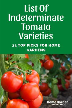 Gardeners like to grow indeterminate tomatoes for eating fresh, while the determinate varieties work well for preparing sauces and canning. If you're looking for a long season of picking fresh tomatoes off the vines, there are plenty of indeterminate tomato varieties you can try. Here is a list of indeterminate tomato varieties popular picks among home gardeners. Determinate Tomatoes, Plants For Raised Beds, Grow Tomatoes, Tomato Plants, Vegetable Garden, Planting Flowers, Sauces, Vines, Home And Garden