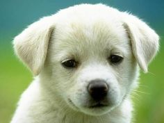 What type of #dog are you? Take the #quiz and find out!