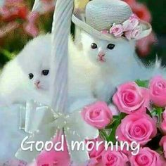 Cats in their hats! Latest Good Morning Images, Good Morning Coffee, Good Morning Picture, Good Morning Good Night, Morning Pictures, Good Morning Wishes, Morning Pics, Morning Love Quotes, Morning Greetings Quotes